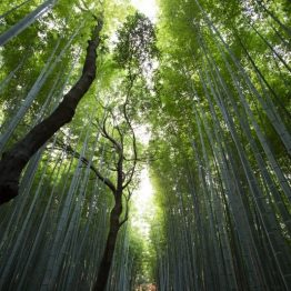 canopée bambou
